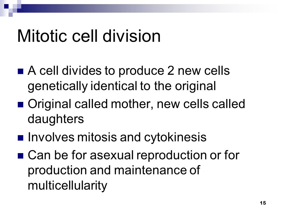 Mitotic cell division A cell divides to produce 2 new cells genetically identical to the original.