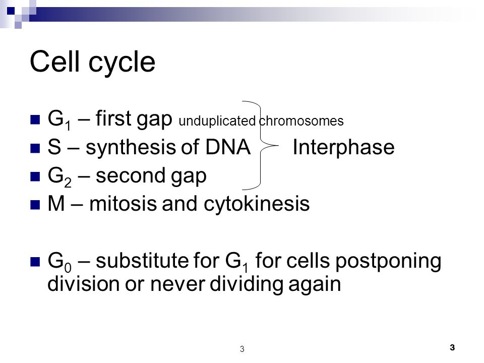 Cell cycle G1 – first gap unduplicated chromosomes