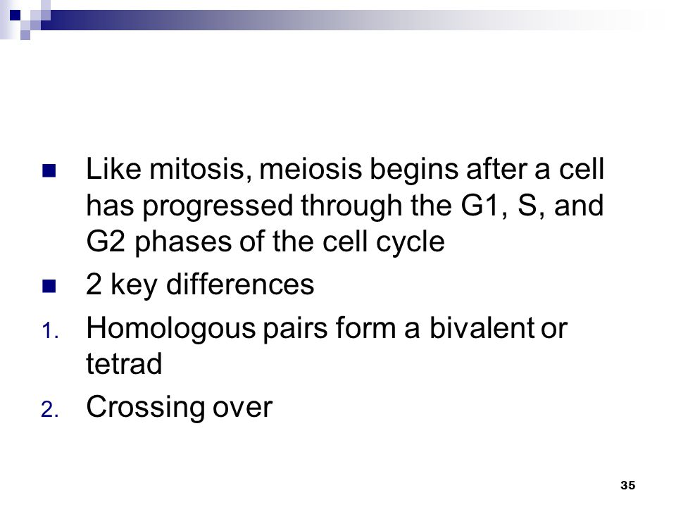Like mitosis, meiosis begins after a cell has progressed through the G1, S, and G2 phases of the cell cycle