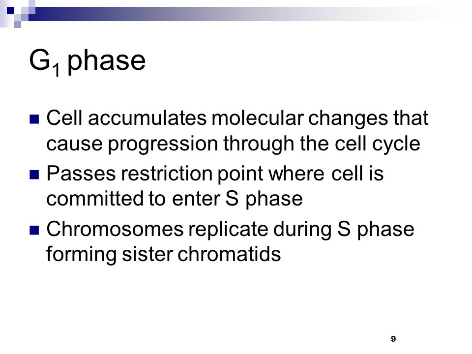 G1 phase Cell accumulates molecular changes that cause progression through the cell cycle.