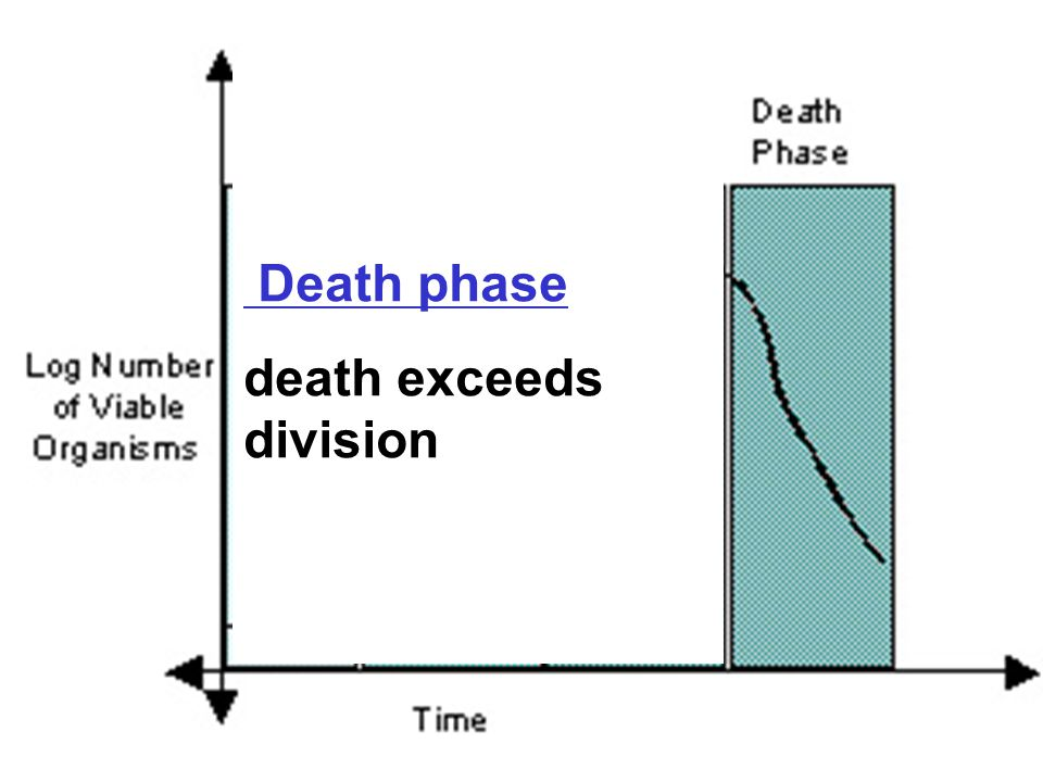 Death phase death exceeds division