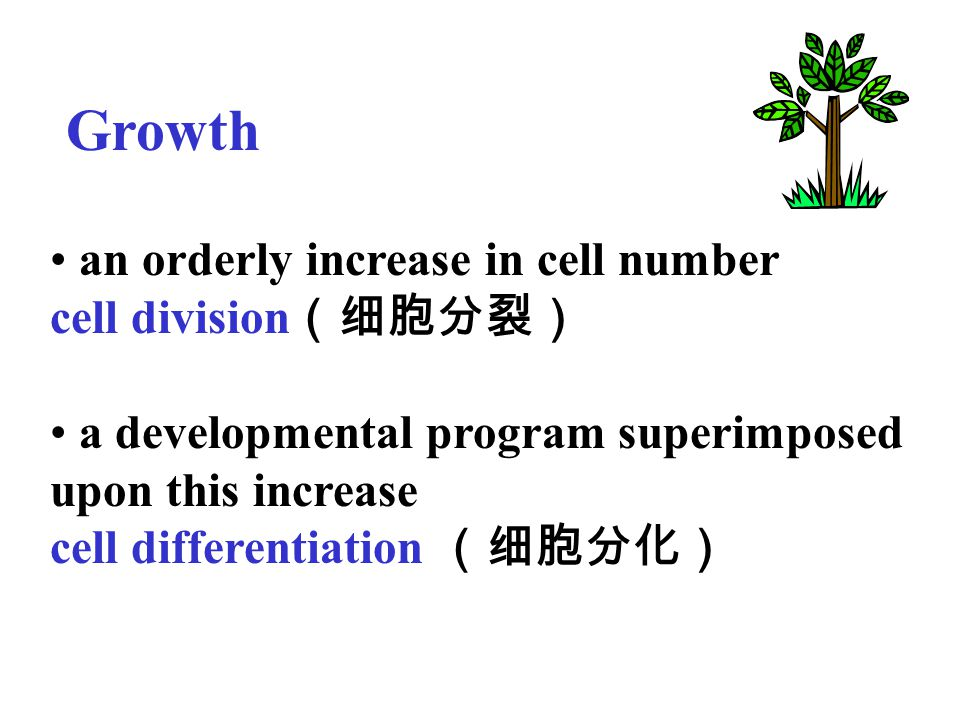 Growth an orderly increase in cell number cell division(细胞分裂)