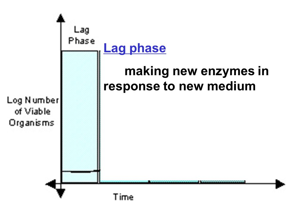 Lag phase making new enzymes in response to new medium