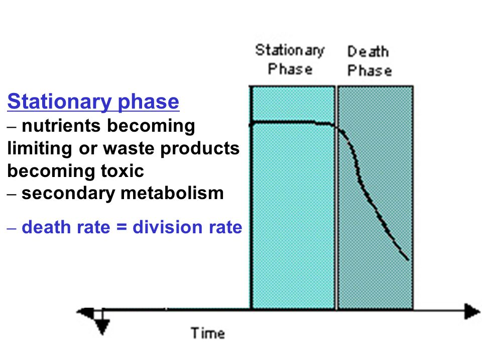 Stationary phase – nutrients becoming limiting or waste products becoming toxic – secondary metabolism