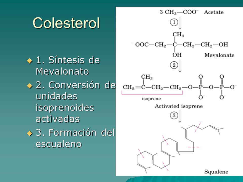 Colesterol 1. Síntesis de Mevalonato