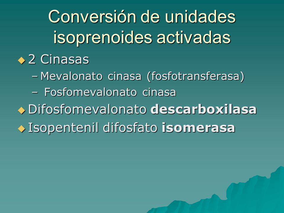 Conversión de unidades isoprenoides activadas