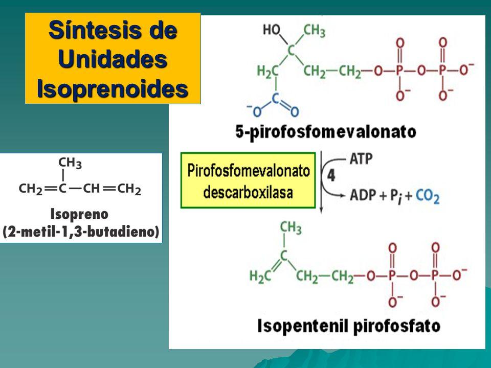 Síntesis de Unidades Isoprenoides