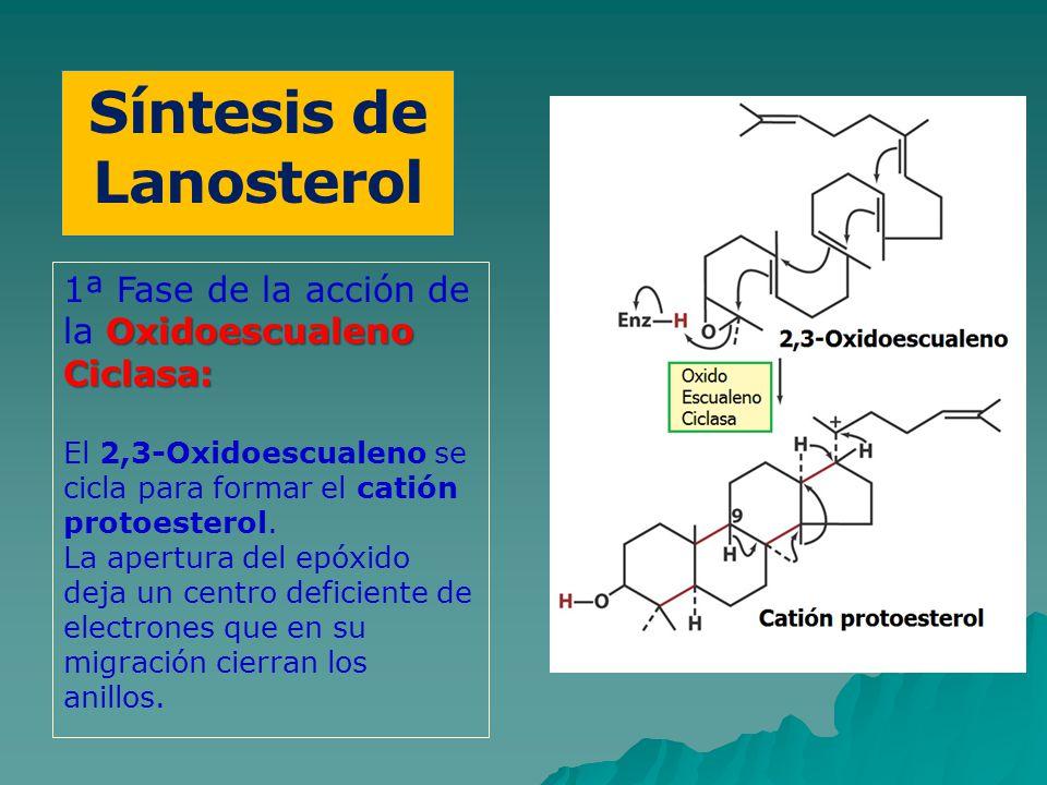 Síntesis de Lanosterol