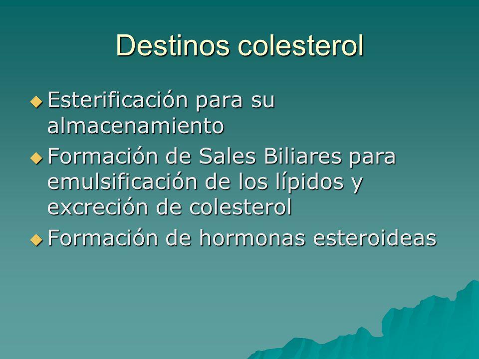 Destinos colesterol Esterificación para su almacenamiento