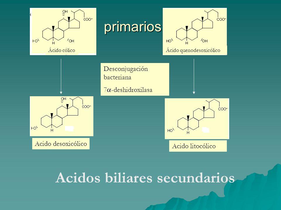 Acidos biliares secundarios