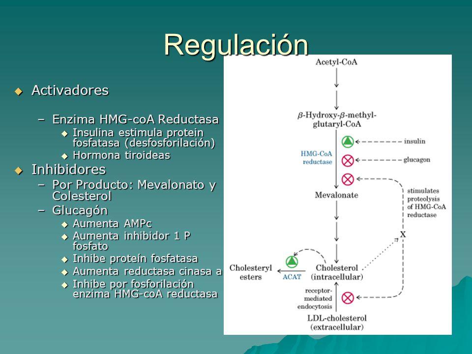 Regulación Activadores Inhibidores Enzima HMG-coA Reductasa