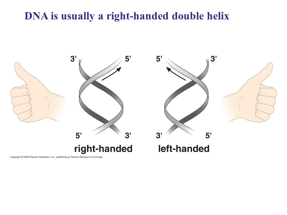 DNA is usually a right-handed double helix