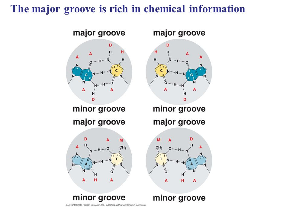 The major groove is rich in chemical information