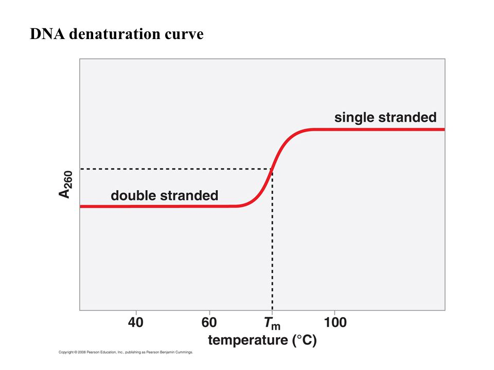 DNA denaturation curve