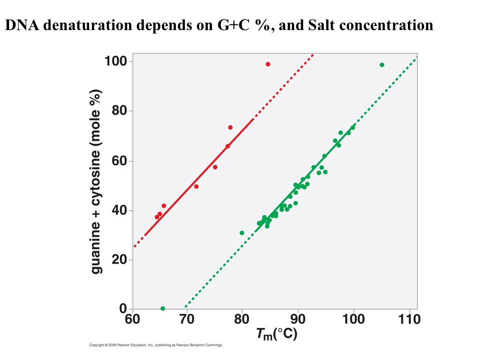 DNA denaturation depends on G+C %, and Salt concentration
