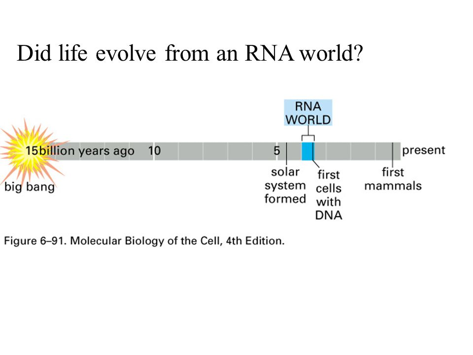 Did life evolve from an RNA world