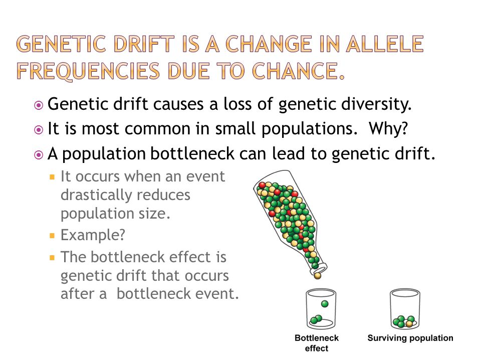 Genetic drift is a change in allele frequencies due to chance.