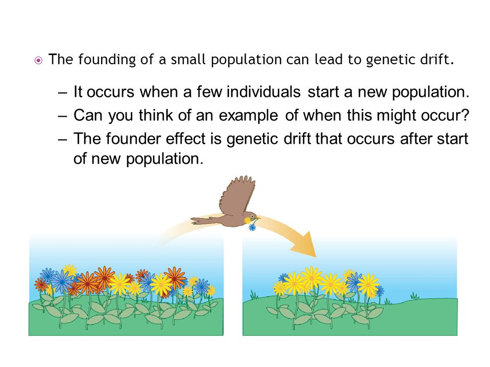 It occurs when a few individuals start a new population.