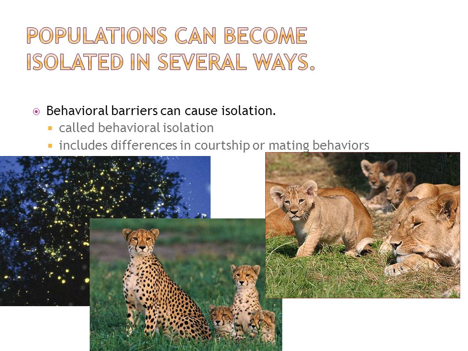Populations can become isolated in several ways.