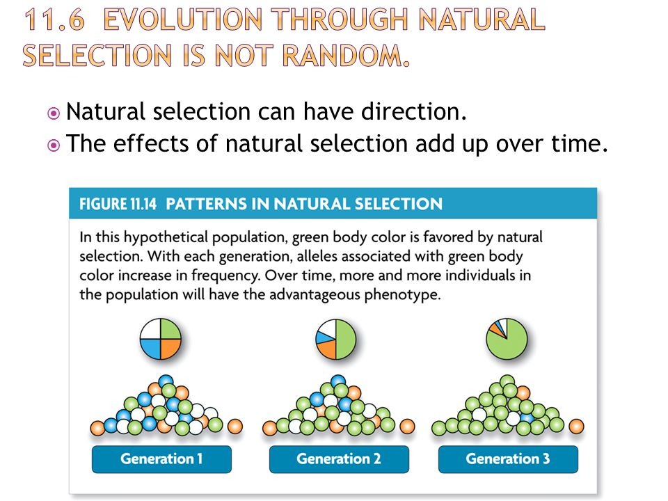 11.6 Evolution through natural selection is not random.