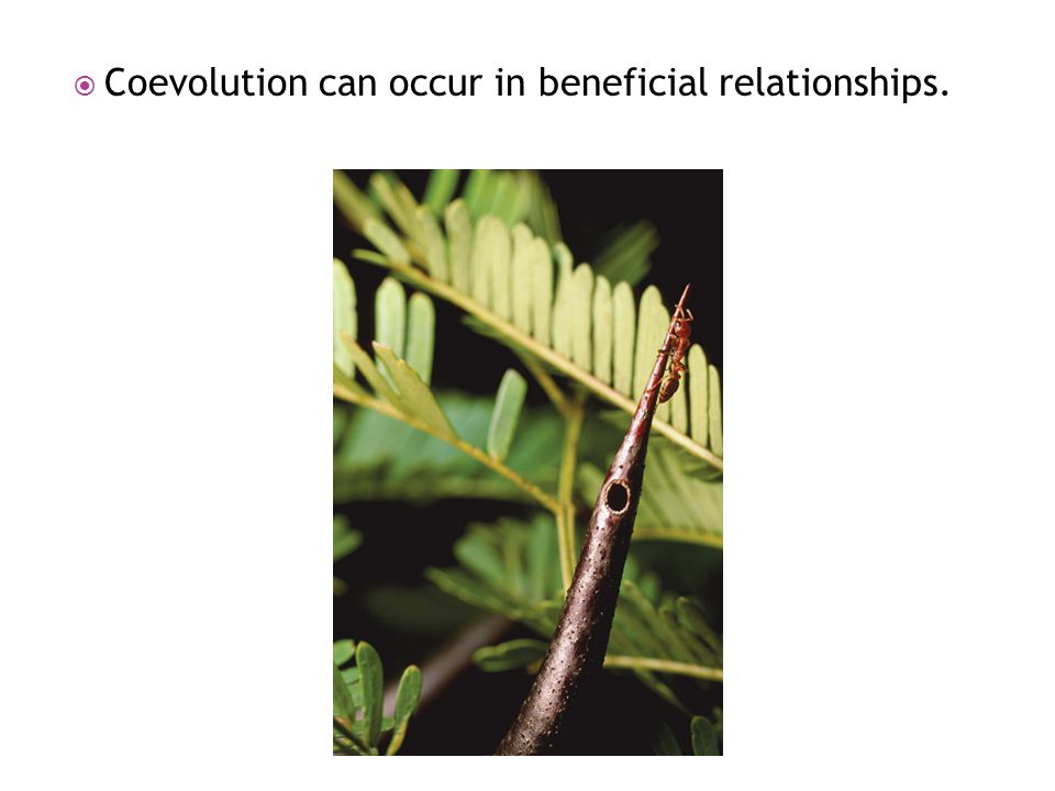 Coevolution can occur in beneficial relationships.