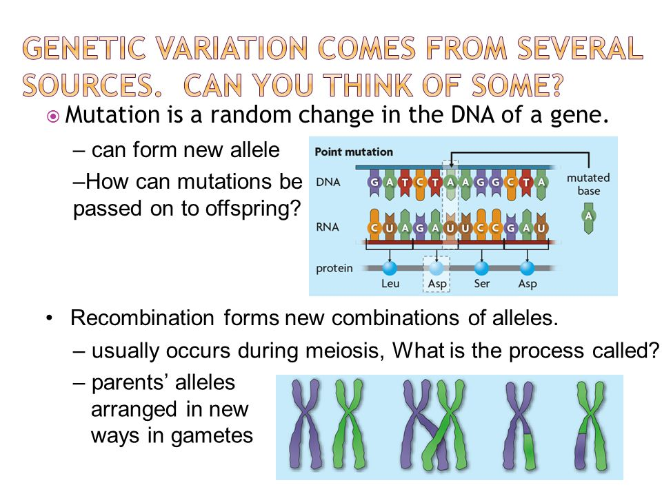 Genetic variation comes from several sources. Can you think of some