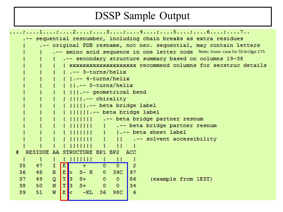 DSSP Sample Output Note: lower case for SS-bridge CYS