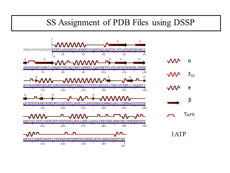 SS Assignment of PDB Files using DSSP