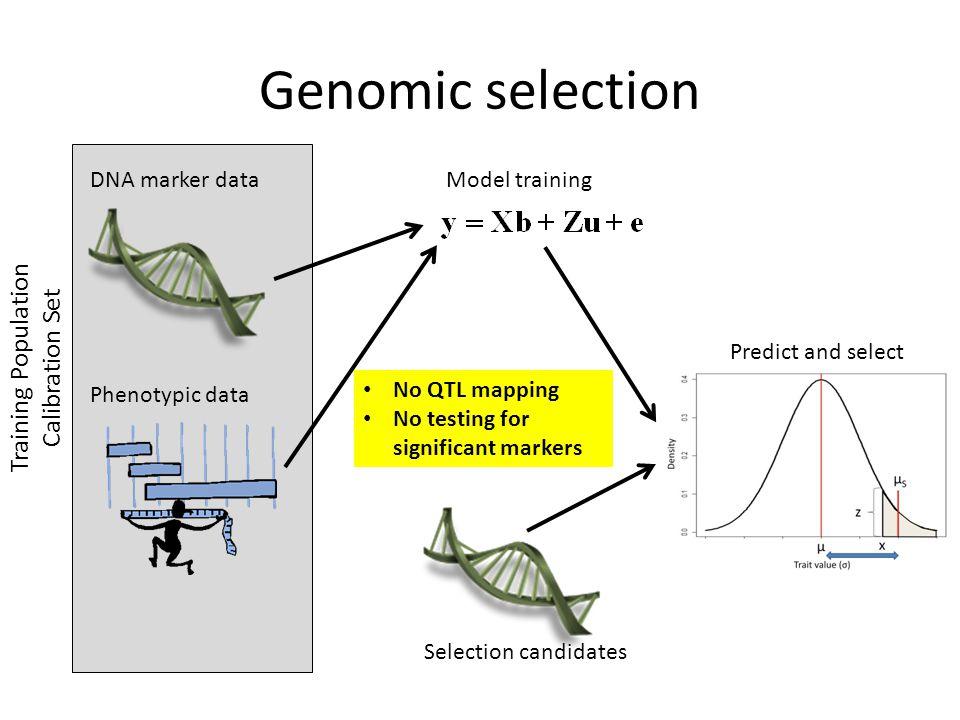 Genomic selection Training Population Calibration Set DNA marker data