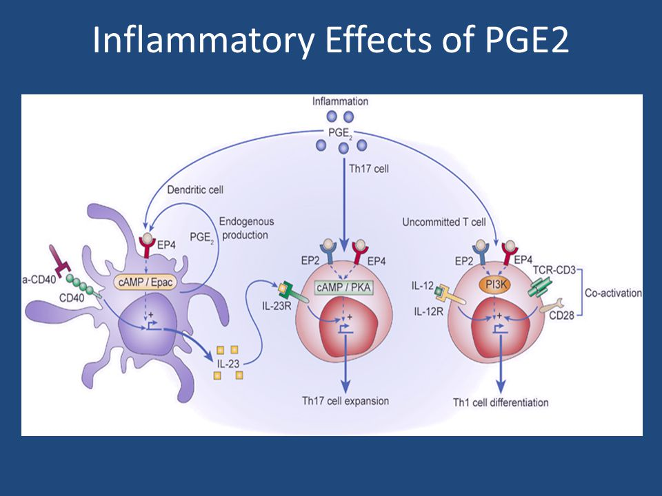 Inflammatory Effects of PGE2
