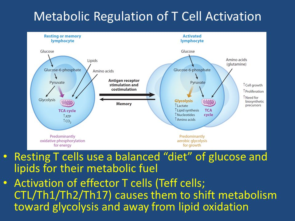 Metabolic Regulation of T Cell Activation