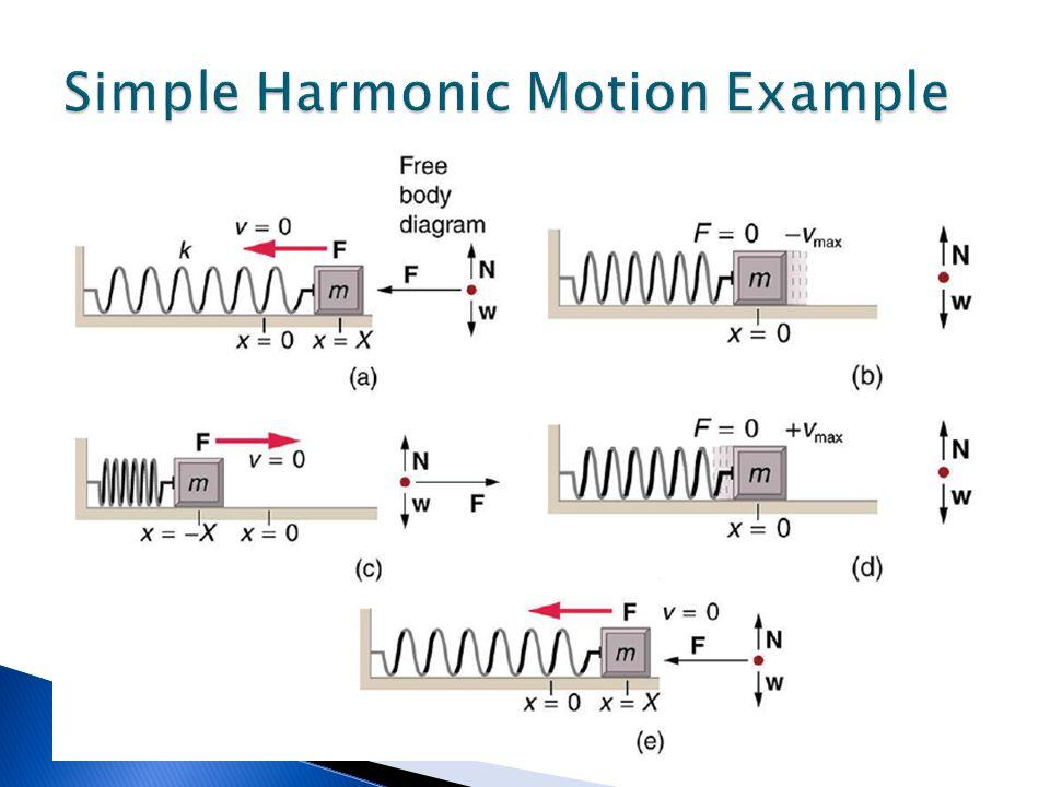 Simple Harmonic Motion Example