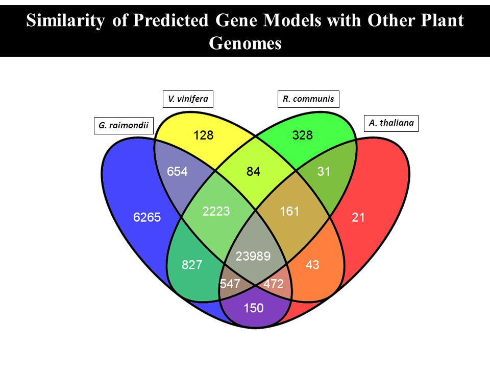 Similarity of Predicted Gene Models with Other Plant Genomes