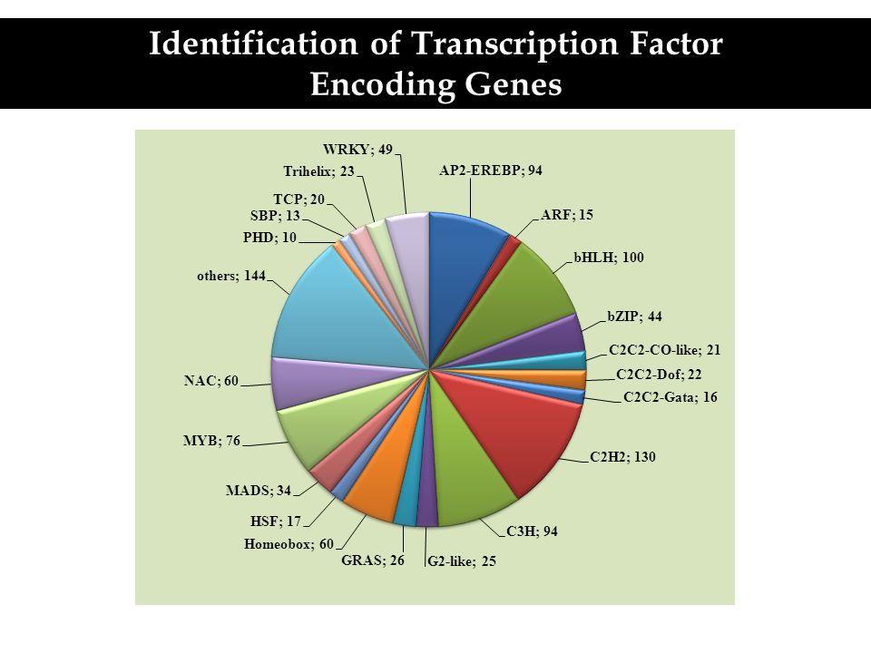 Identification of Transcription Factor