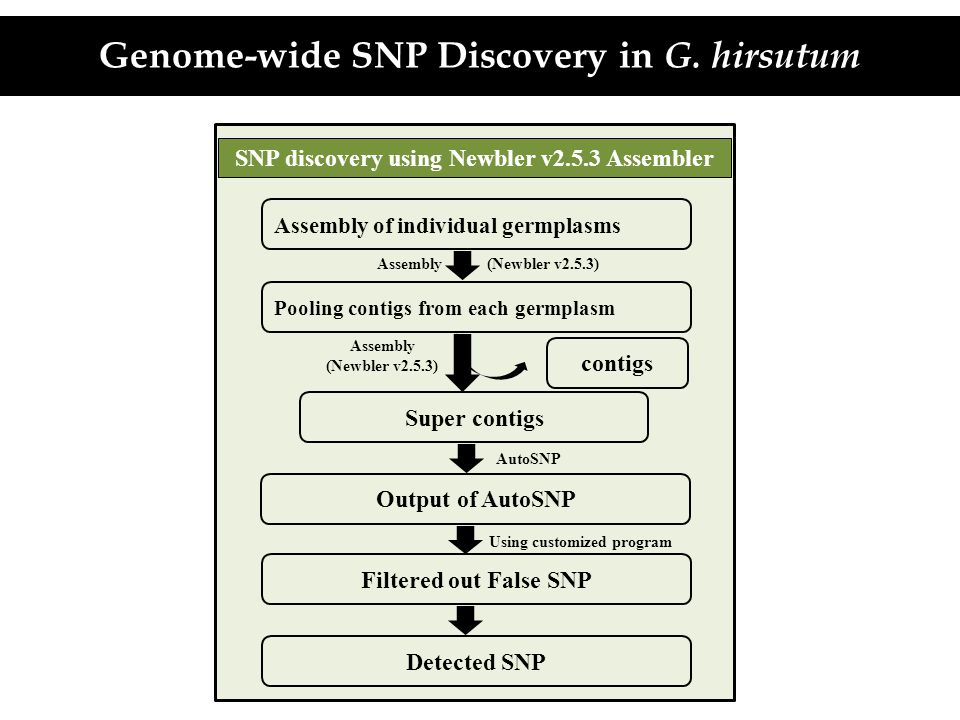 Genome-wide SNP Discovery in G. hirsutum