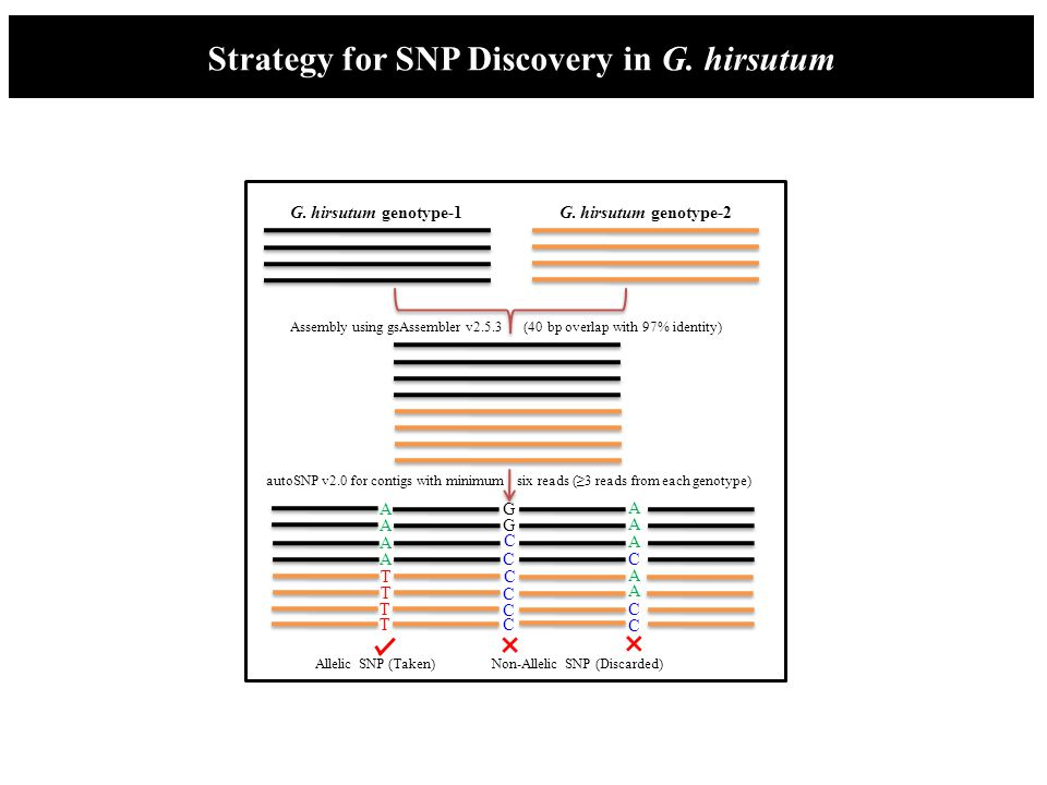 Strategy for SNP Discovery in G. hirsutum