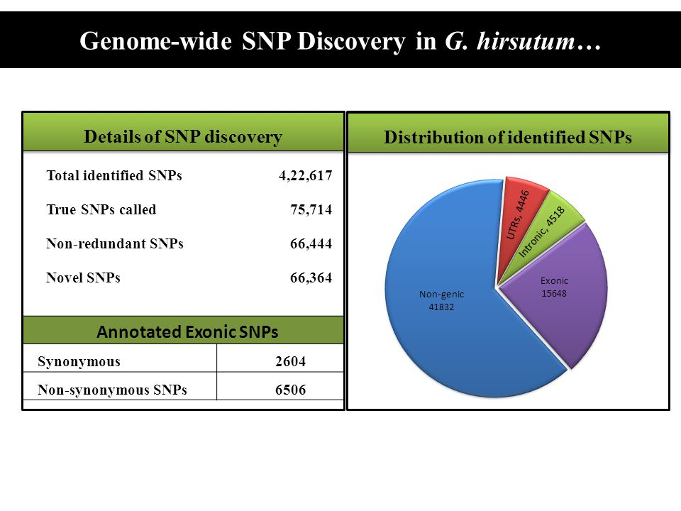 Genome-wide SNP Discovery in G. hirsutum…