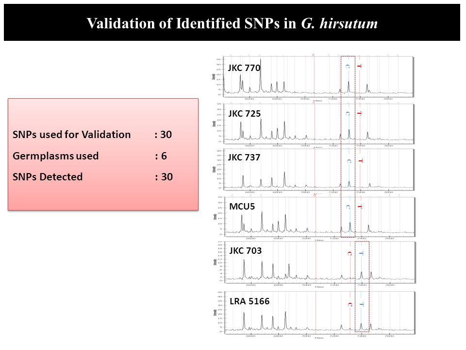 Validation of Identified SNPs in G. hirsutum