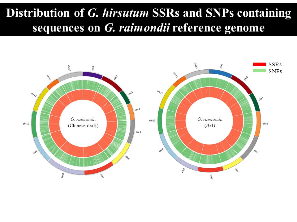Distribution of G. hirsutum SSRs and SNPs containing sequences on G