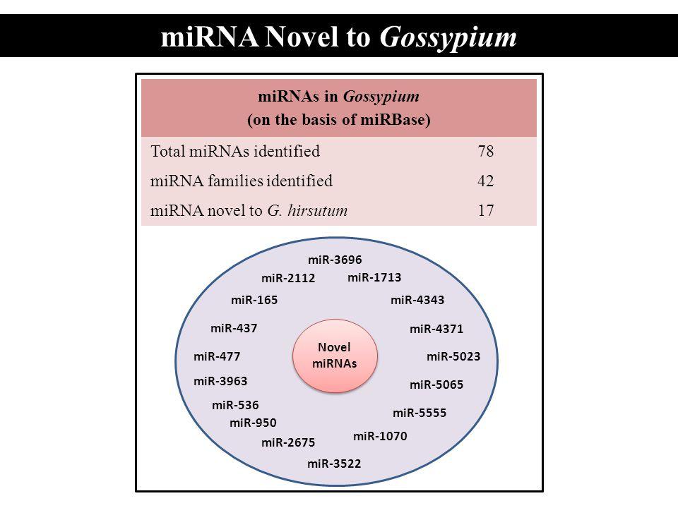 miRNA Novel to Gossypium (on the basis of miRBase)