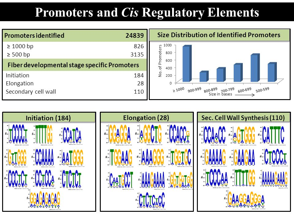 Promoters and Cis Regulatory Elements