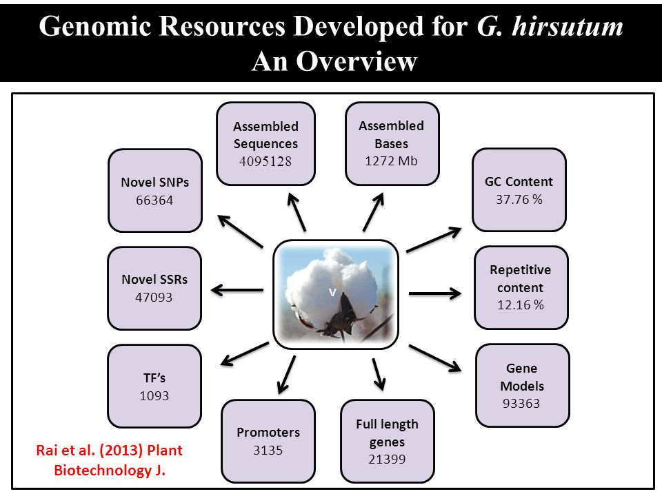 Genomic Resources Developed for G. hirsutum An Overview
