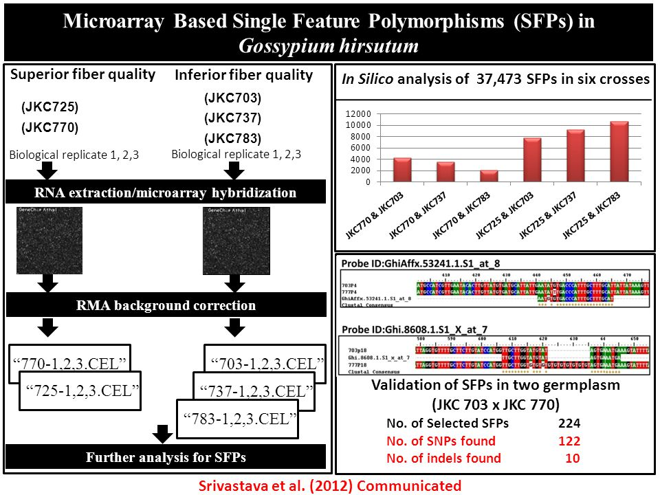Microarray Based Single Feature Polymorphisms (SFPs) in