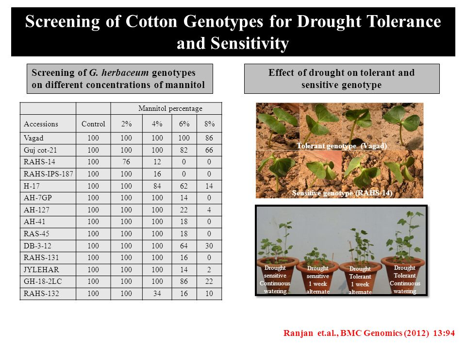 Screening of Cotton Genotypes for Drought Tolerance and Sensitivity