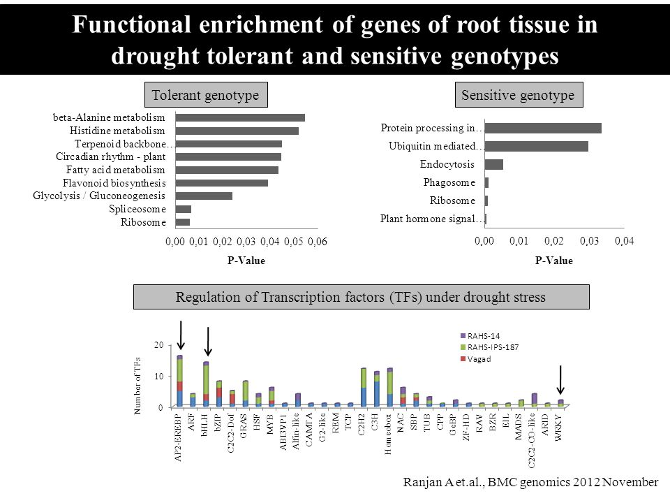 Functional enrichment of genes of root tissue in