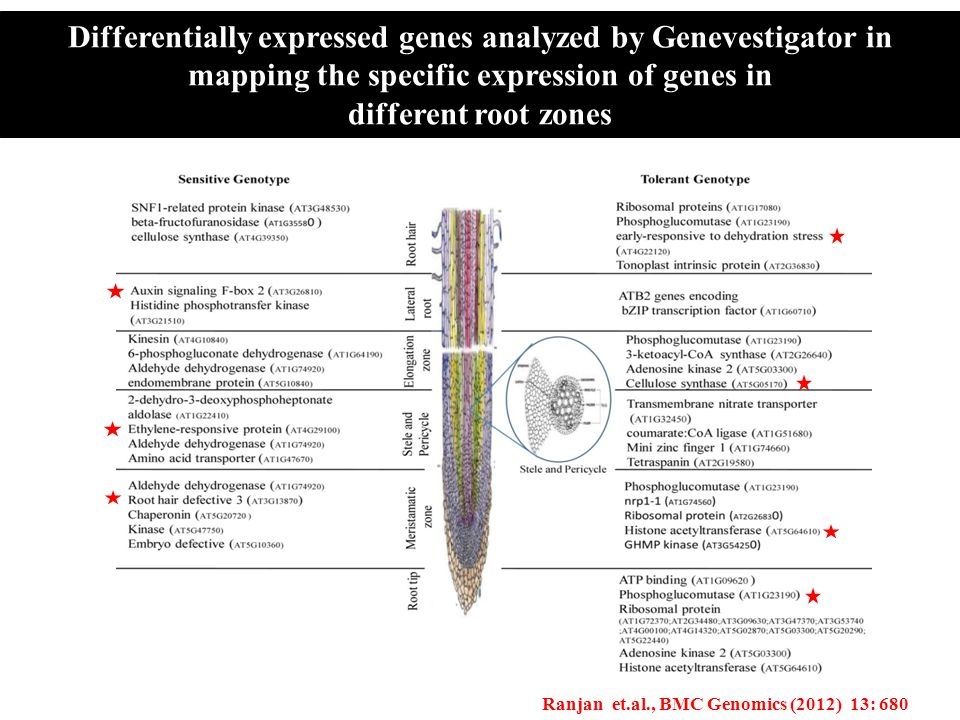 Differentially expressed genes analyzed by Genevestigator in mapping the specific expression of genes in