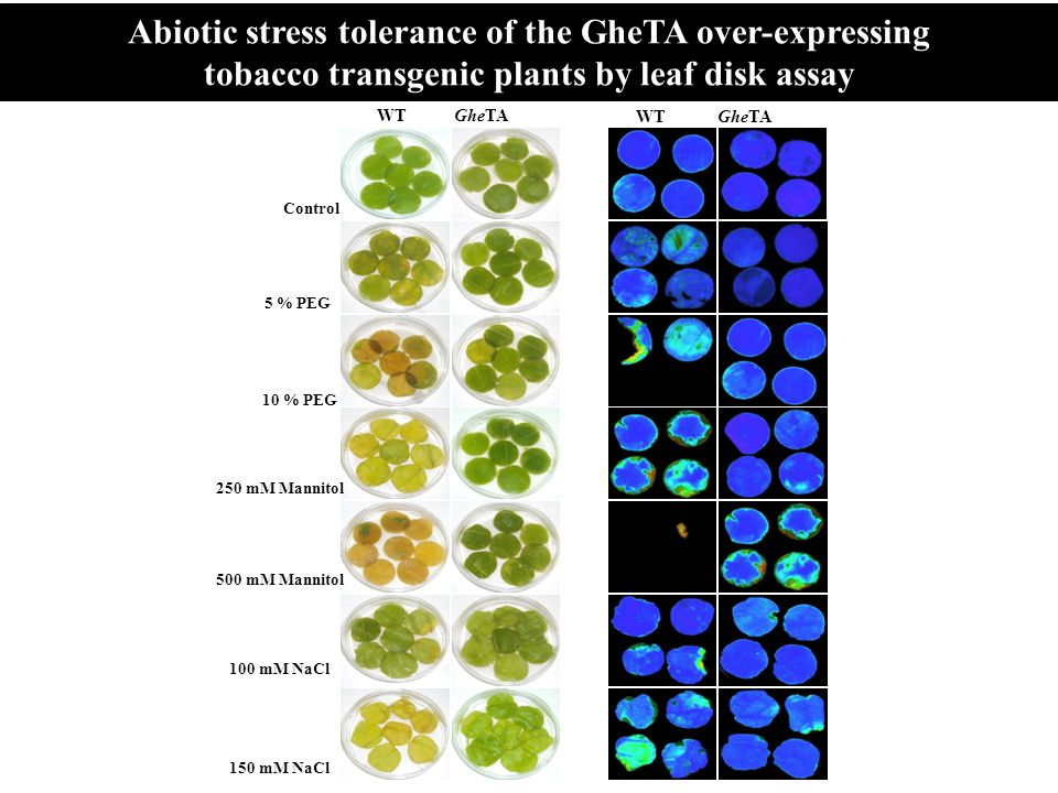 Abiotic stress tolerance of the GheTA over-expressing