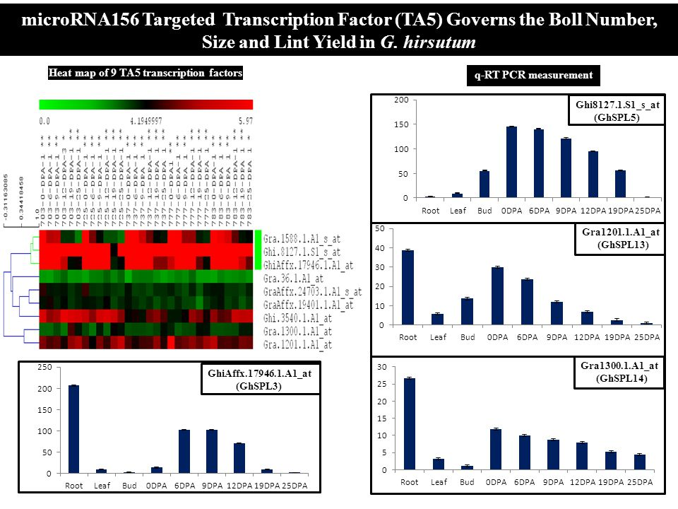 Heat map of 9 TA5 transcription factors