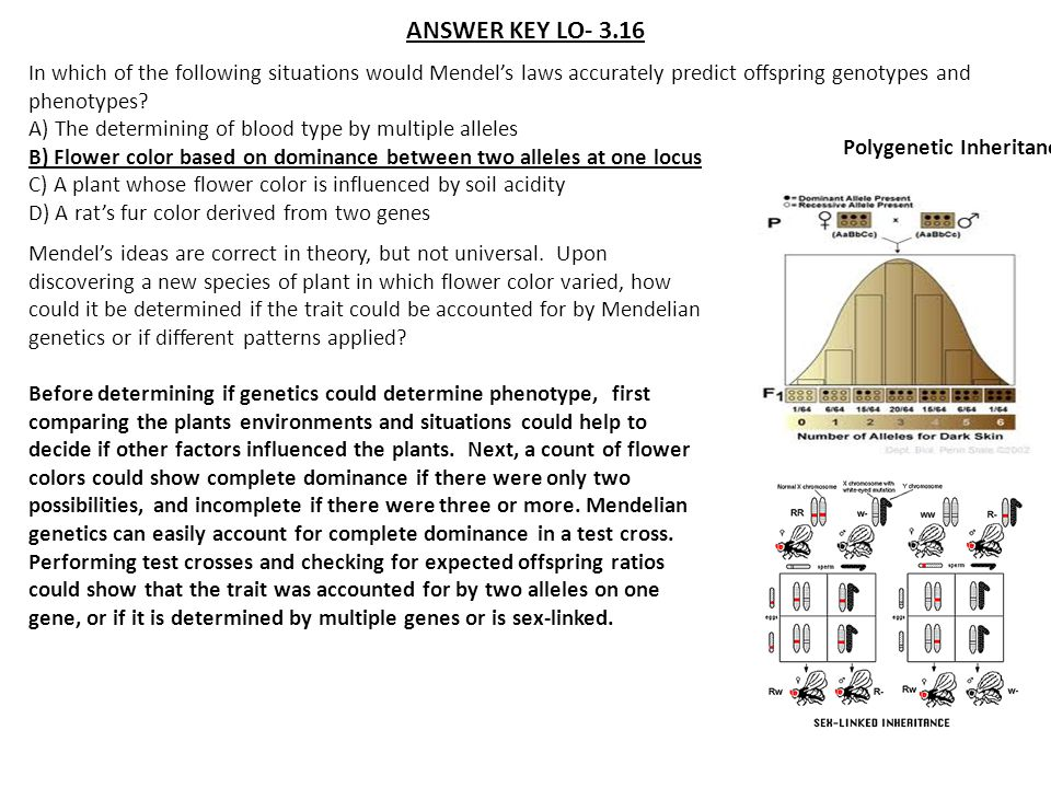 ANSWER KEY LO- 3.16 In which of the following situations would Mendel's laws accurately predict offspring genotypes and phenotypes