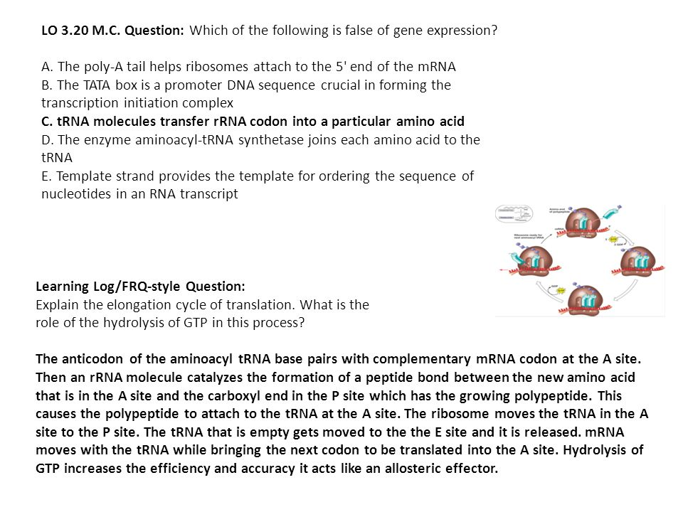 LO 3.20 M.C. Question: Which of the following is false of gene expression